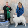 Kelsa wins her way to #1 Female Samoyed in 2013, at 10 years old...